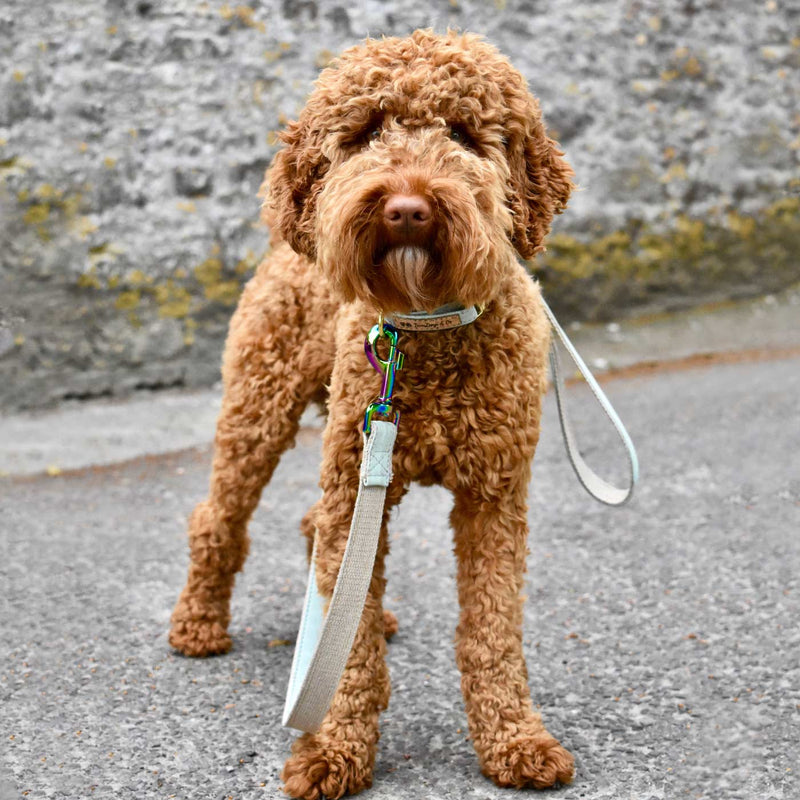 Cork and Hemp Dog Lead