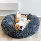 A Dog Bed Keeps Your Pet Warm and Comfortable