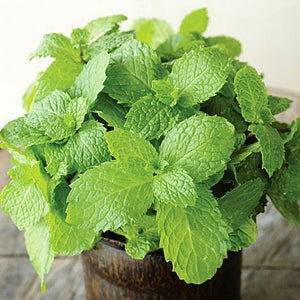 Spearmint Essential Oil - 30 ml