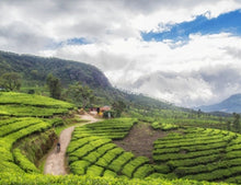 Kerala 7 Nights / 8 Days
