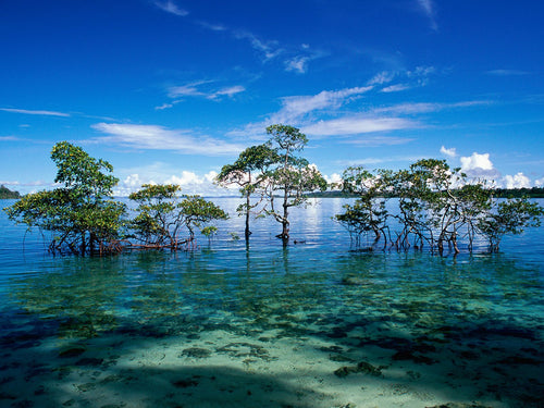 BEST OF ANDAMAN (Port Blair 2N + Havelock 2N + Neil Island 1N)