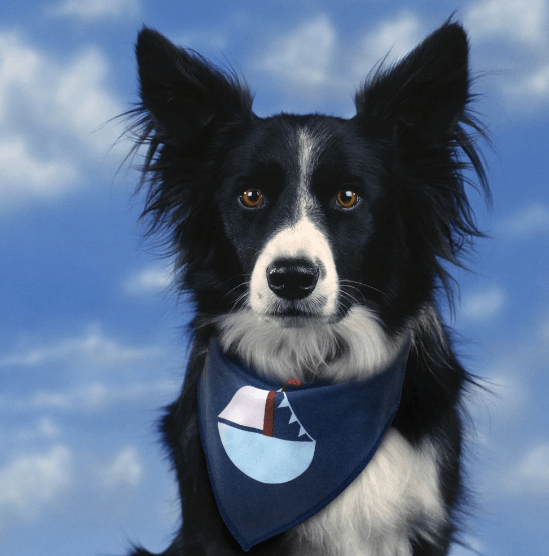 Dog Adjustable Bandana