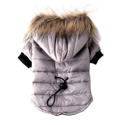 Chihuahua Winter Jacket