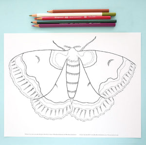 Coloring Page: Moth
