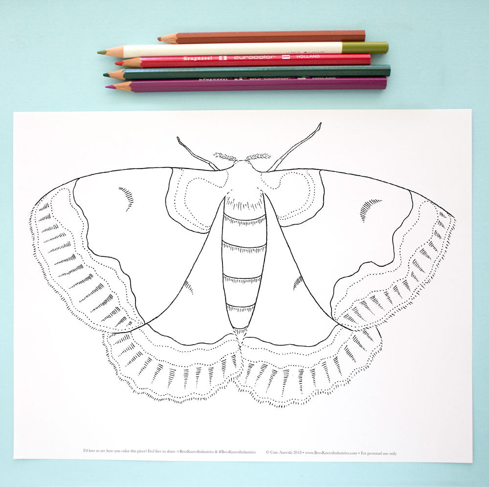 Coloring Page Moth Bees Knees Industries 24