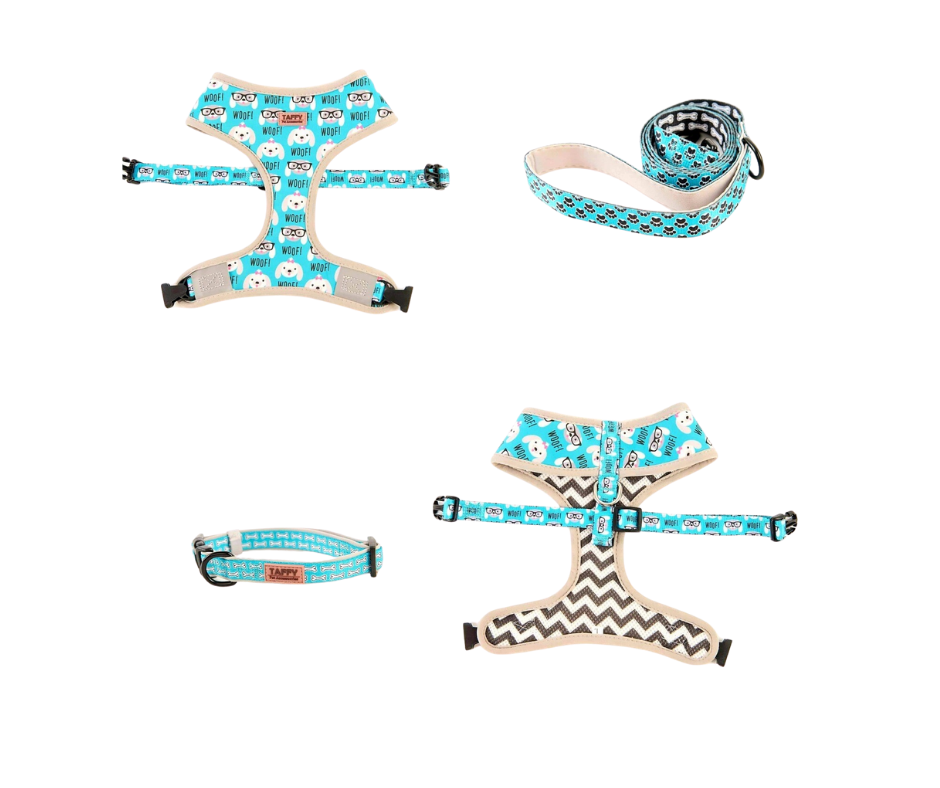 Taffy Pet Harness , Leash & Collar Package