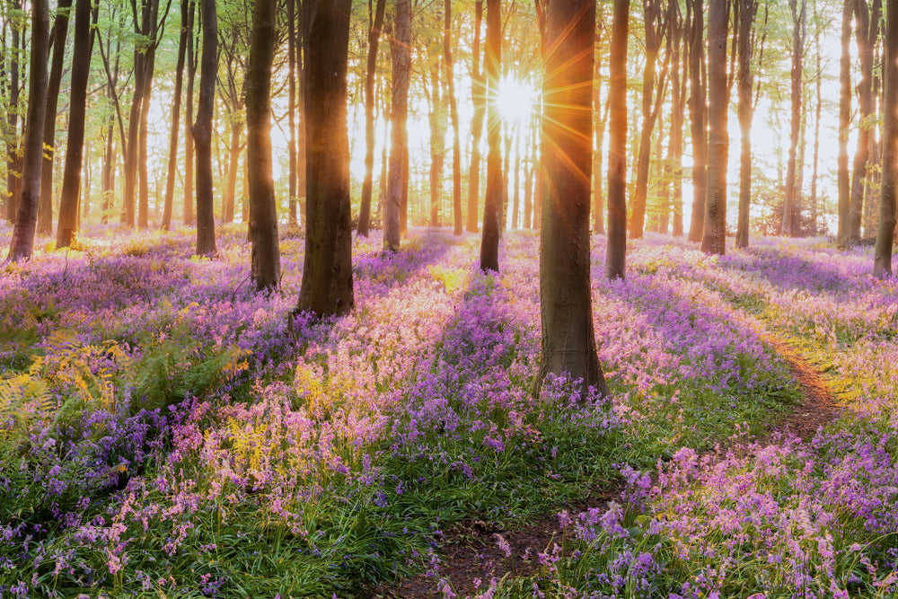 The benefits nature has on mental health
