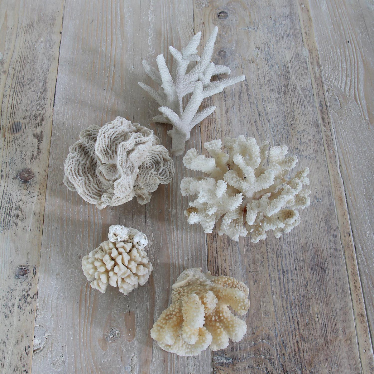 Decorative Collection of Five Vintage Corals