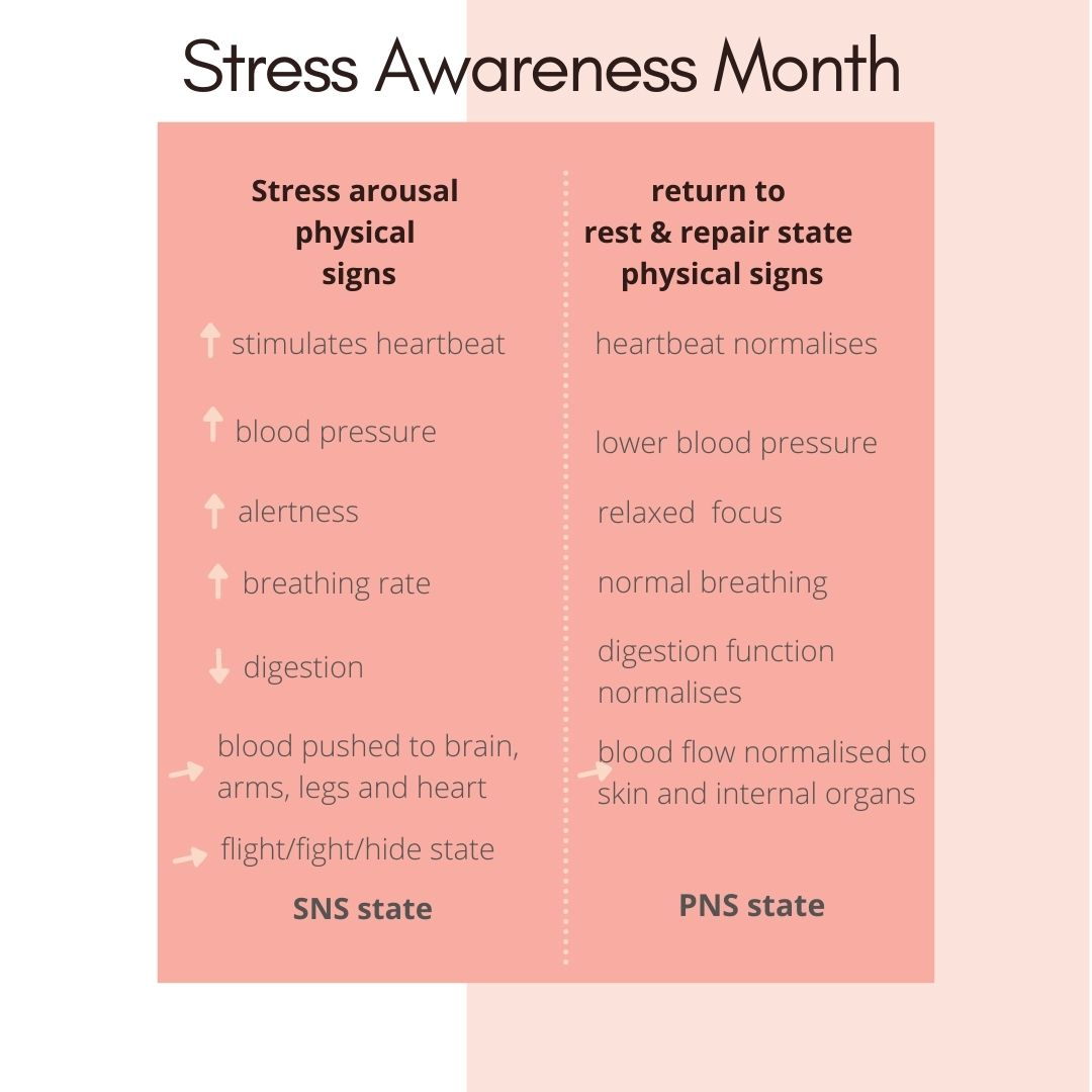 what happens in a stress response