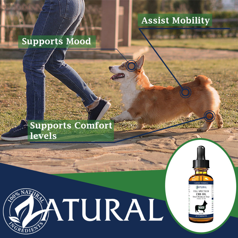 CBD for Dogs Benefit