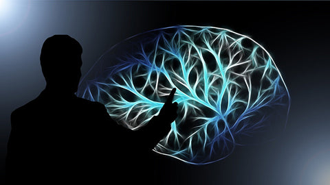 Scientist pointing to illustration of human brain. buy hemp oil online USA. Full spectrum.