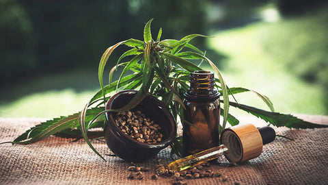 CBD oil and hemp leaves. where to buy cbd for dogs.