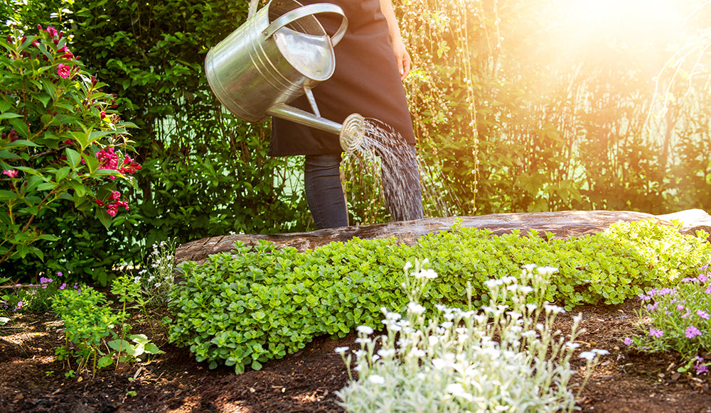 How to use Neem Soil Drench
