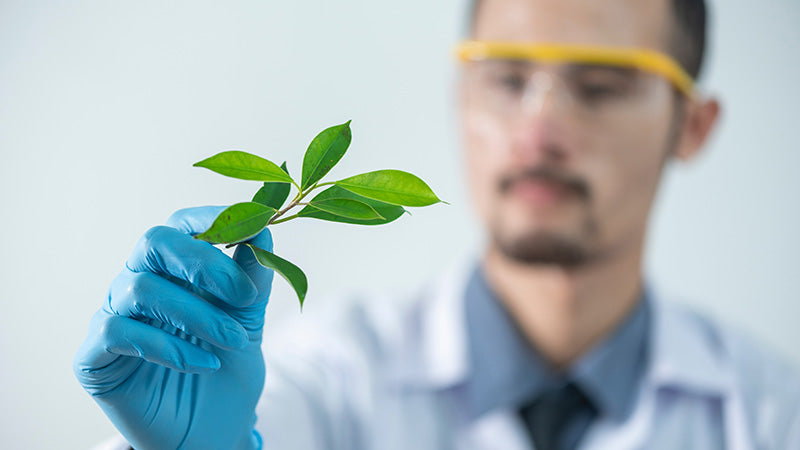 Lab technician holding a plant leaf. What are terpenes in cbd oil? Where to buy cbd oil with terpenes?