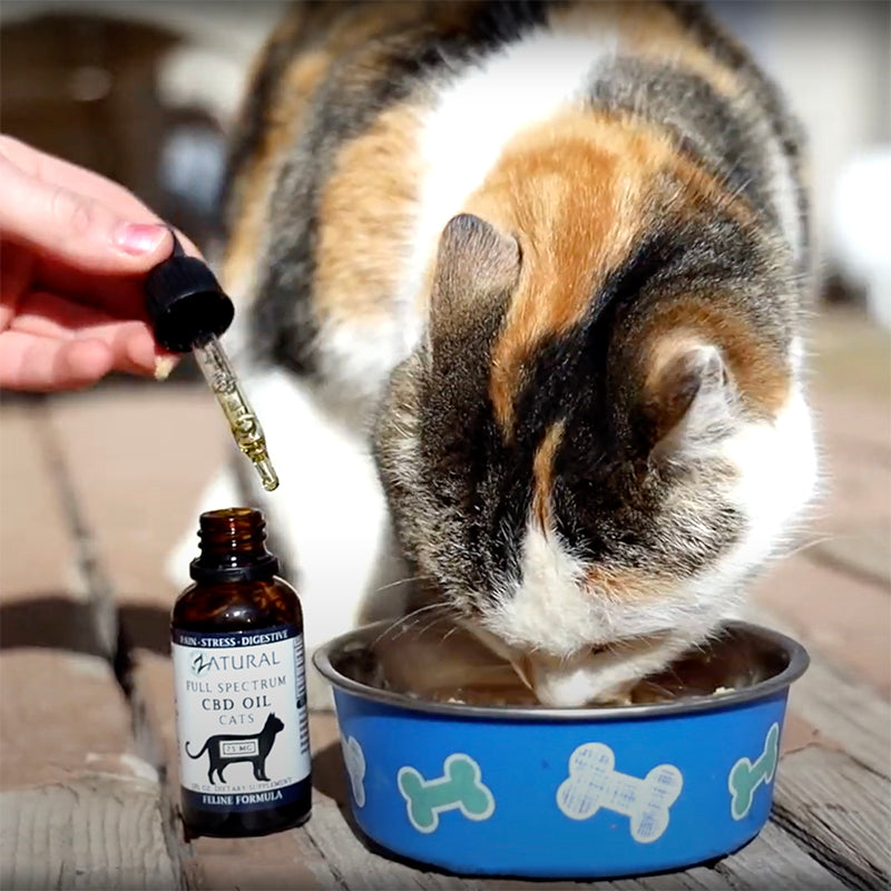 CBD Cat Oil
