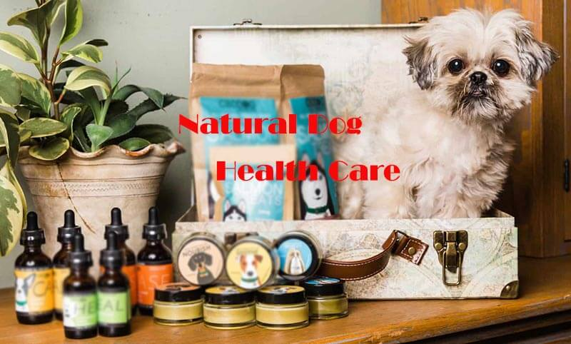Improve Your Dog's Health With Natural Dog Health Care