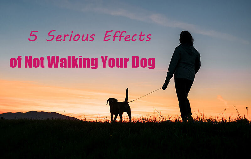5 Serious Effects of Not Walking Your Dog
