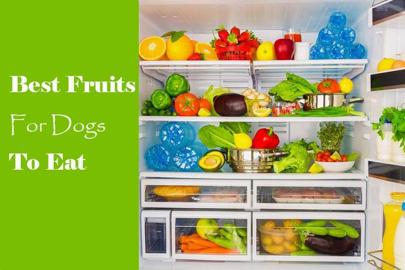 10 Best Fruits for Dogs