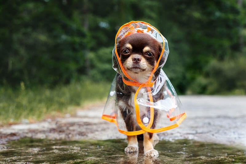 Tips and Essentials for Dog Strolling within the Rainwater