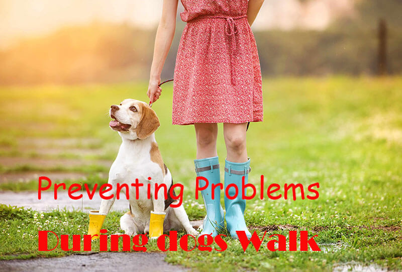 Preventing Problems With Your Dog During the Walk