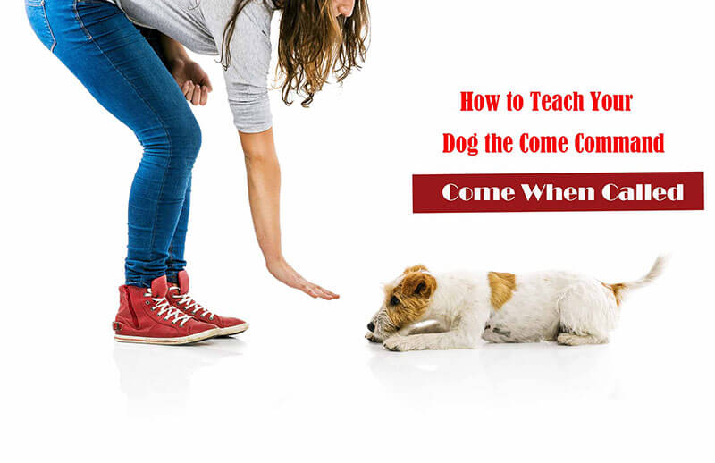 How to Teach Your Dog the Come Command