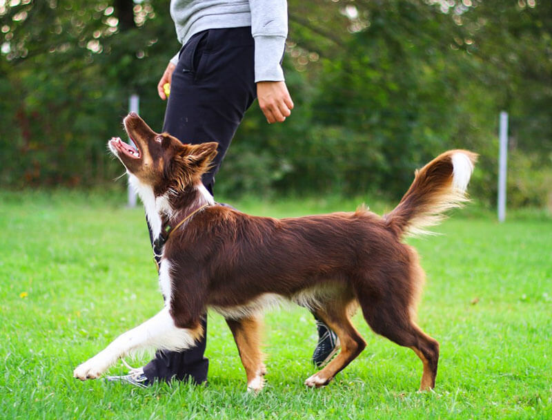 Which Types of Collars and Harnesses are Safe for Your Dog?