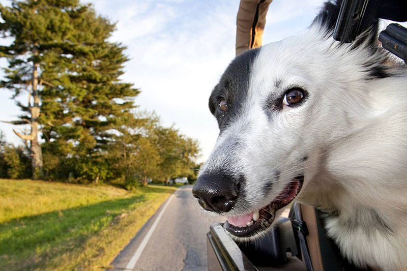 Which seat is the safest for your dog in the car? 5 things you need know