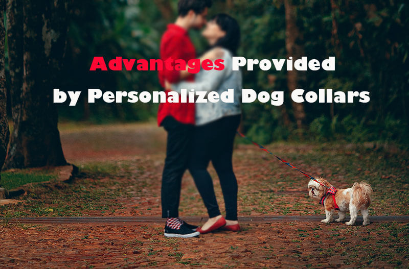 Advantages Provided by Personalized Dog Collars to Proprietors