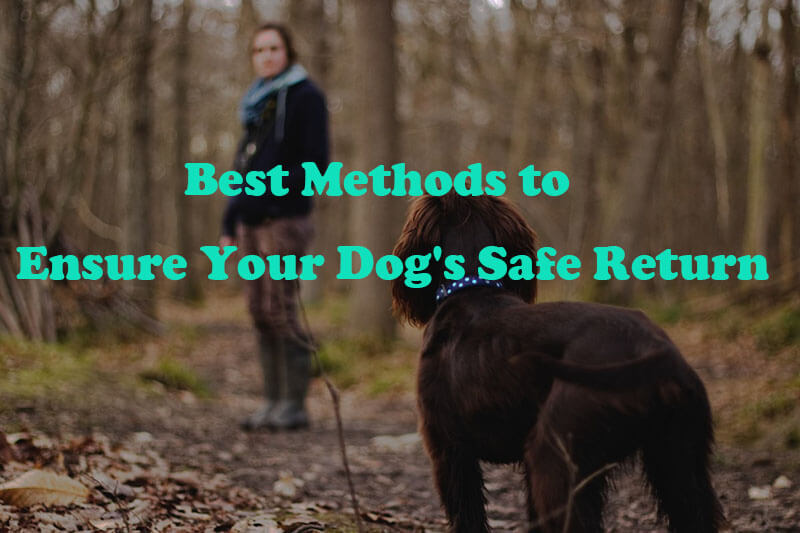 Personalized Dog Collars: Best Methods to Ensure Your Dog's Safe Return