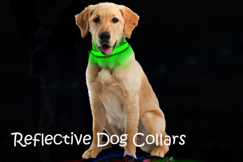 The Benefits of Using Reflective Dog Collars with Name