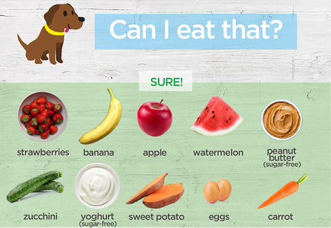 Can Dogs Eat Carrots? - Pet Food Facts