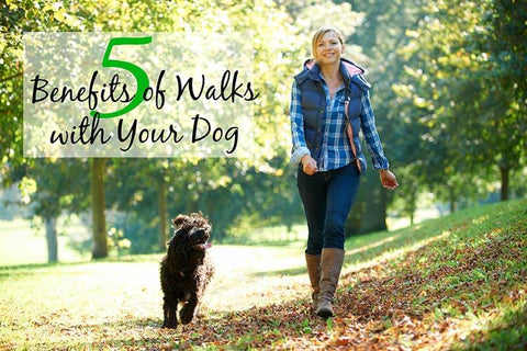 5 Benefits of Walks with Your Dog