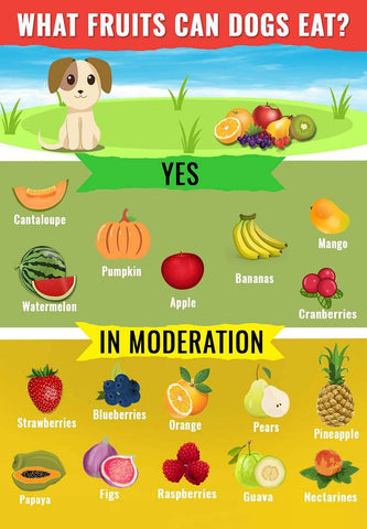 Best Fruits For Dogs To Eat