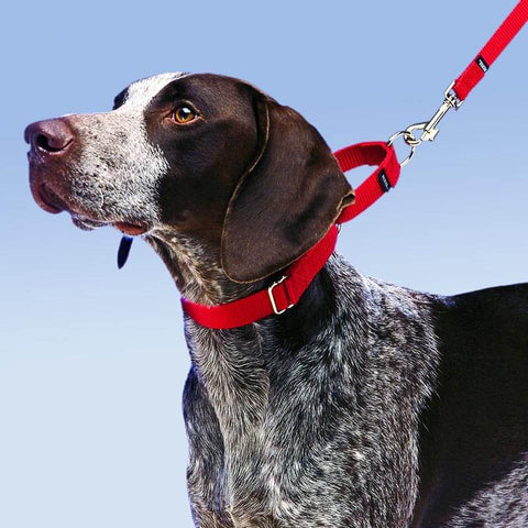 Use a Martingale Collar for your Dog