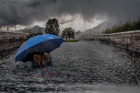 Walking Your Dog in the Rain: Tips & How to Prep