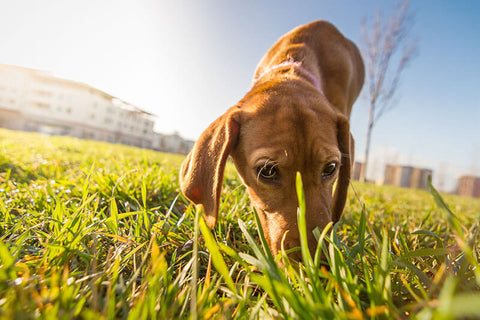 Sniff Is so Important to Your Dog During Walks