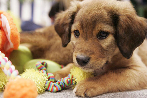 New Puppy Training Tip - Stop Chewing