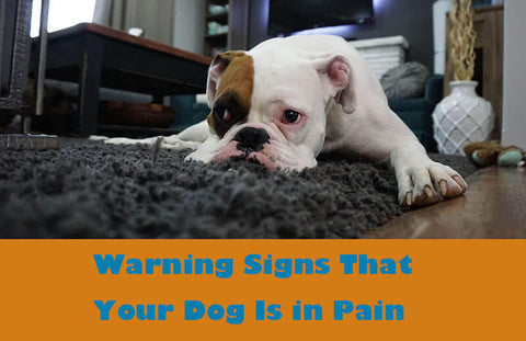 Signs & Symptoms of Discomfort in Dogs