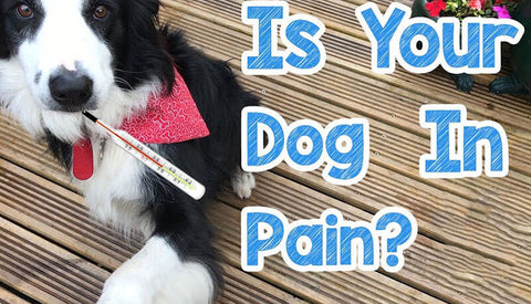 Signs And Symptoms That Your Dog Is In Pain
