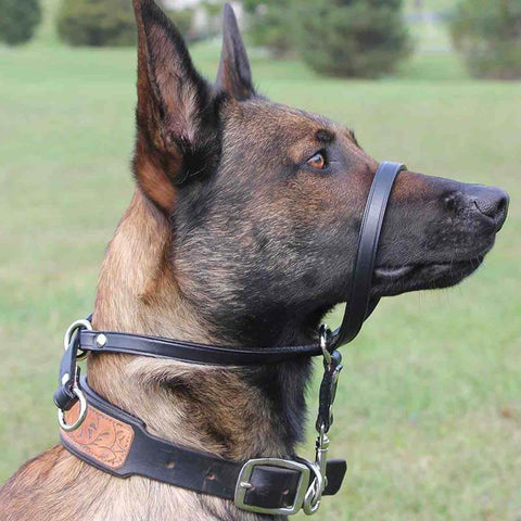 Head collars, also called head halters,custom dog collars