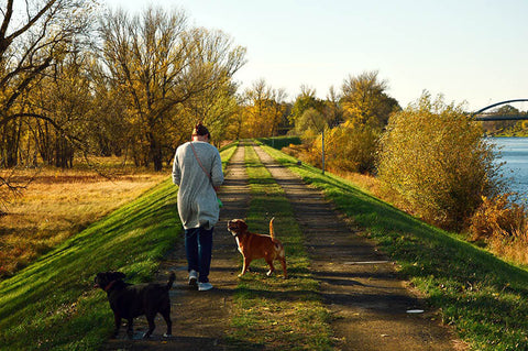 Dog Walking Tools Every Professional Needs