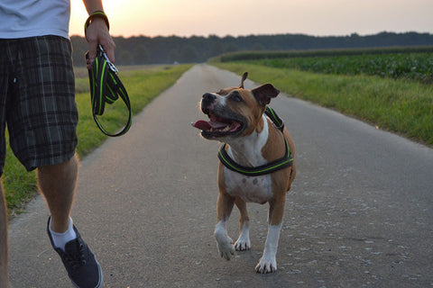 Why Personalized Dog Collars Are Essential For Your Pet