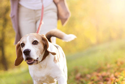 taking a dog for a walk can make us healthier
