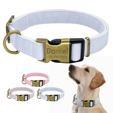 relax your dog during a walk, custom dog collars