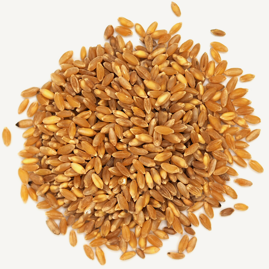 Durum berries