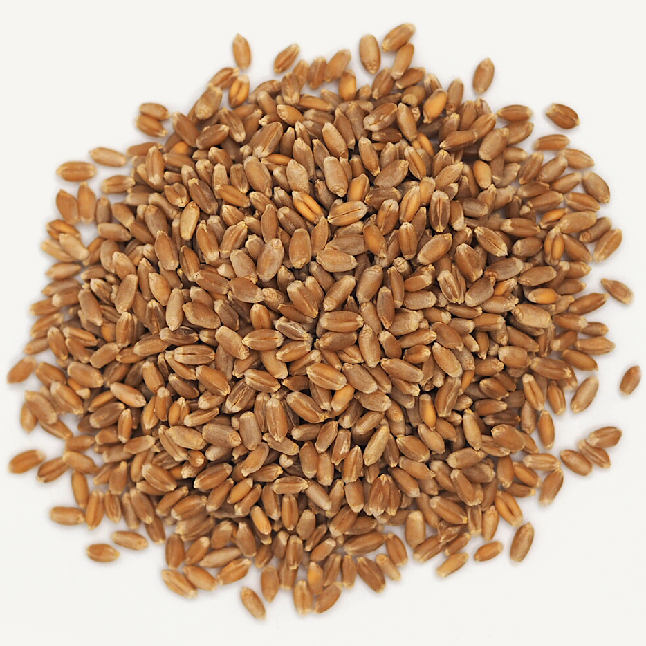Red Spring Wheat Berries