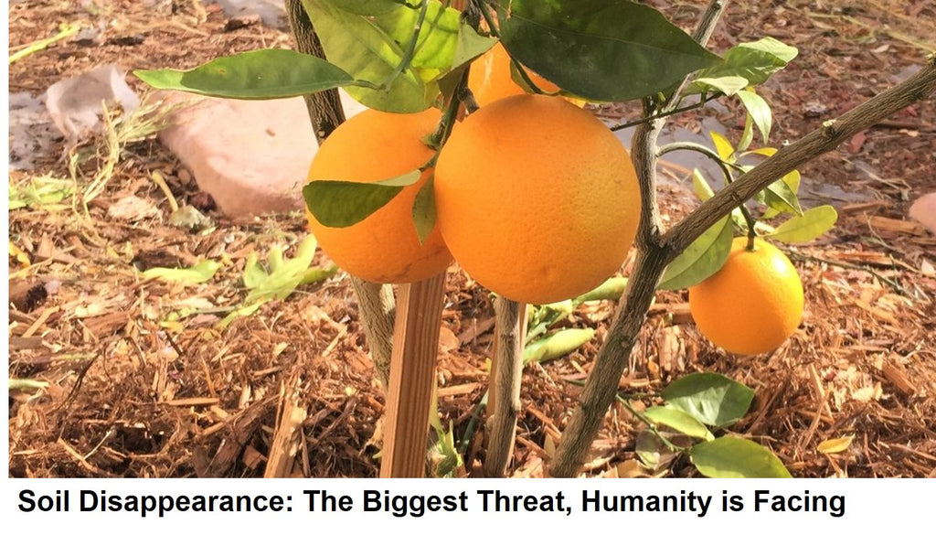 Soil Disappearance: The Biggest Threat, Humanity is Facing
