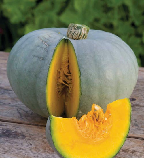 Seasonal Squash (Crown Prince)