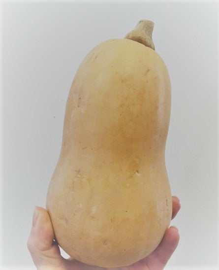 Butternut Squash (each) (Org)