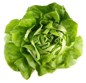 Lettuce - Marvel (each)